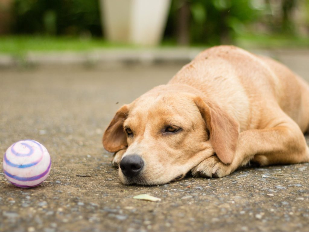 6 Ways Your Landing Page Could Be Wasting Your Money dog chew toy
